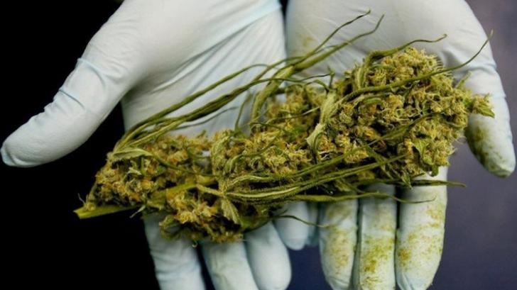 kenevir-ot-marijuana-yasallasiyor